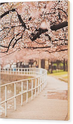 Canopy Of Cherry Blossoms Over A Walking Trail Wood Print by Susan Schmitz