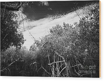 Canopy Of The Mangrove Forest In The Florida Everglades Usa Wood Print by Joe Fox