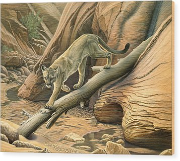 Canyon Hunter -  Cougar Wood Print by Paul Krapf
