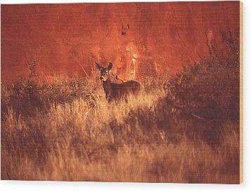 Canyonland Mule Deer Wood Print by T C Brown