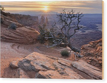 Canyonlands Sunrise Landscape With Dry Tree Wood Print by Yevgen Timashov