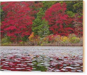 Wood Print featuring the photograph Cape Cod Autumn by Dianne Cowen