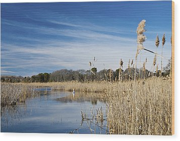 Cape May Marshes Wood Print by Jennifer Ancker
