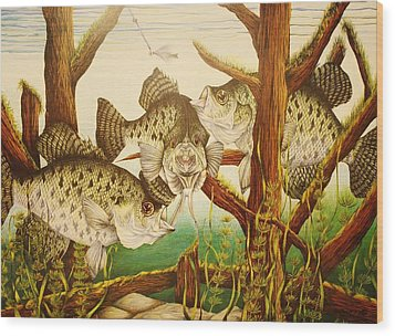 Captivating Crappies Wood Print by Bruce Bley