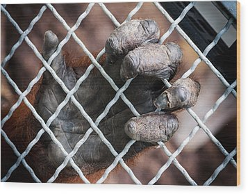 Wood Print featuring the photograph Captive Heart by Sennie Pierson