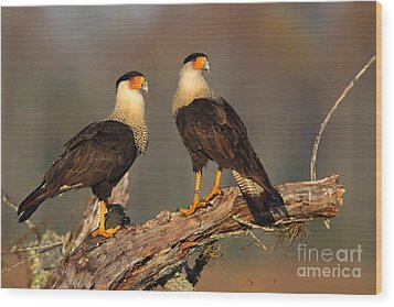 Caracaras Wood Print by Rick Mann