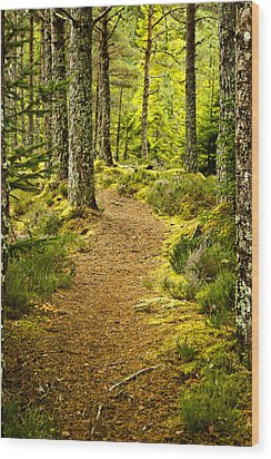 Wood Print featuring the photograph Carbisdale Path Scotland by Sally Ross