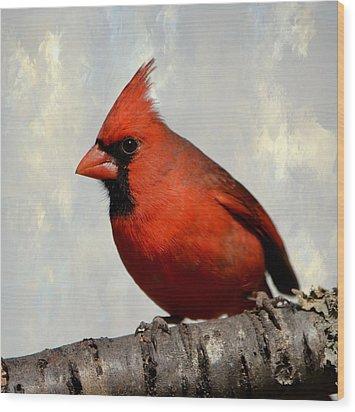 Cardinal 3 Wood Print