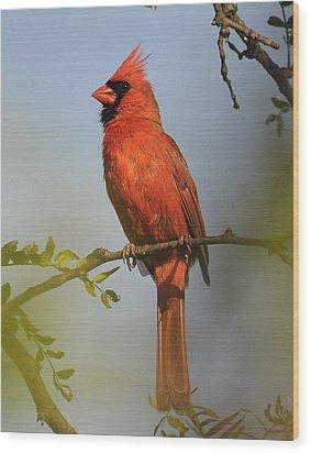 Cardinal 329 Wood Print