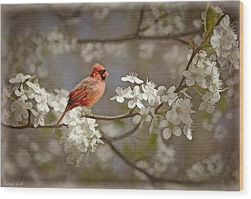 Cardinal And Blossoms Wood Print by Bonnie Willis