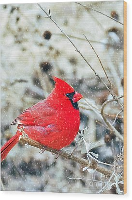 Cardinal Bird Christmas Card Wood Print