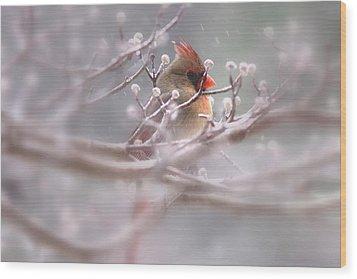 Cardinal - Bird - Lady In The Rain Wood Print by Travis Truelove