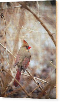 Wood Print featuring the photograph Cardinal Birds Female by Peggy Franz