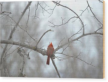 Wood Print featuring the photograph Cardinal Delight by Dacia Doroff
