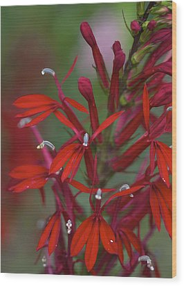 Cardinal Flower Wood Print by Jane Eleanor Nicholas