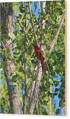 Cardinal Hidden Wood Print