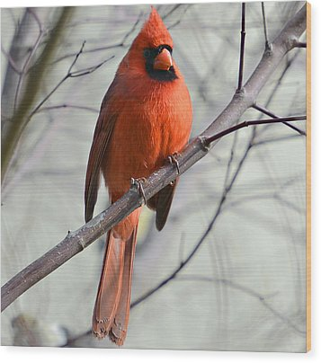 Cardinal In A Tree Wood Print by Susan Leggett