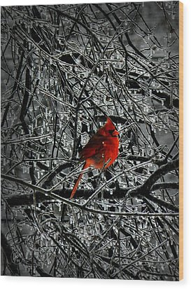 Cardinal In An Ice Storm 001 Wood Print by Lance Vaughn