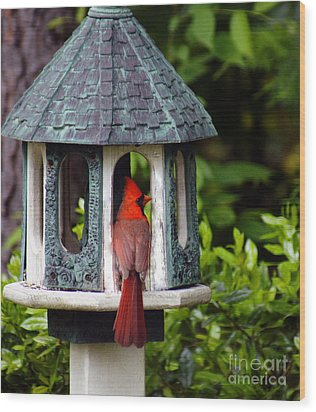 Cardinal In Bird Feeder Wood Print