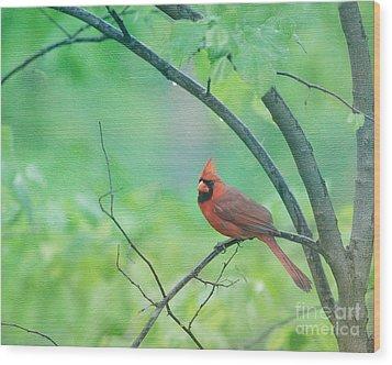 Cardinal In Rain Wood Print by Kay Pickens