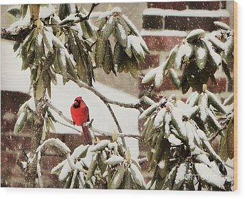 Cardinal In Snow Wood Print