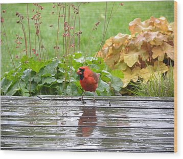 Wood Print featuring the photograph Cardinal In The Rain by Teresa Schomig