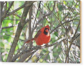 Wood Print featuring the photograph Cardinal In Tree by Jodi Terracina