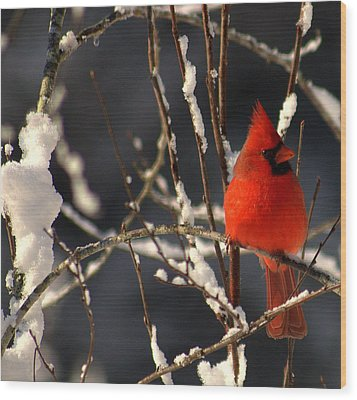 Wood Print featuring the photograph Cardinal In Winter 2 by John Harding