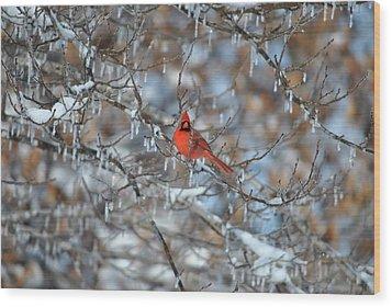 Cardinal In Winter Wood Print by Cim Paddock