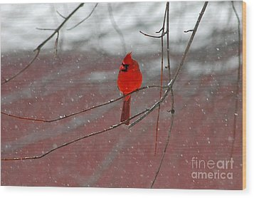 Wood Print featuring the photograph Cardinal In Winter by Olivia Hardwicke