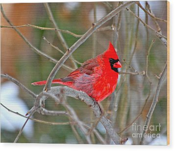 Wood Print featuring the photograph Cardinal by Jay Nodianos