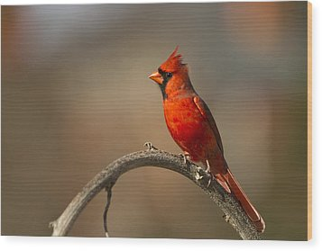 Wood Print featuring the photograph Cardinal by Jerry Gammon
