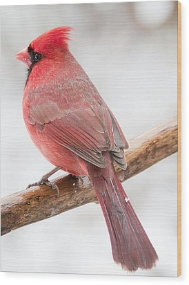 Cardinal Male In Winter Wood Print