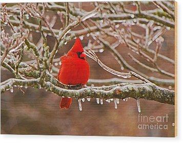 Cardinal Wood Print by Mary Carol Story