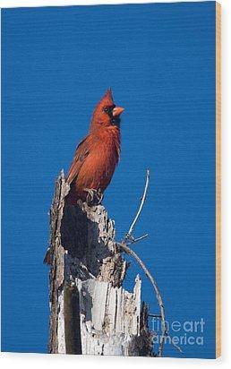 Cardinal On Honeymoon Island Wood Print