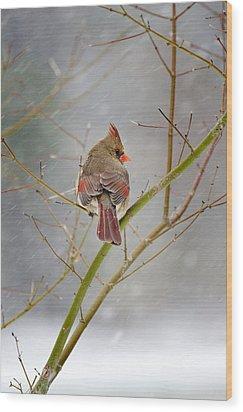 Cardinal On Maple Tree Wood Print by Robert Camp
