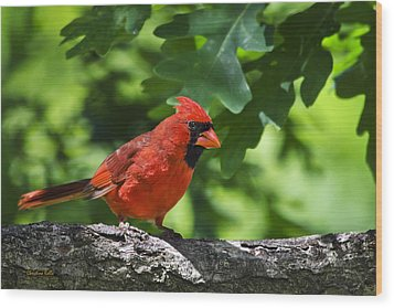 Cardinal Red Wood Print by Christina Rollo