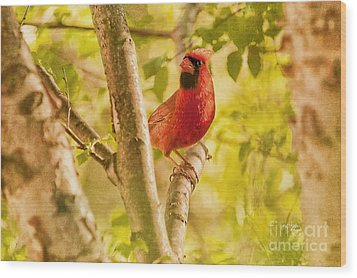 Cardinal Rules Wood Print by Lois Bryan
