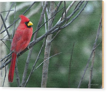 Cardinal West Wood Print by Jeff Kolker