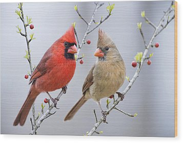 Cardinals In Early Spring Wood Print
