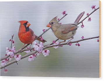 Cardinals In Plum Blossoms Wood Print