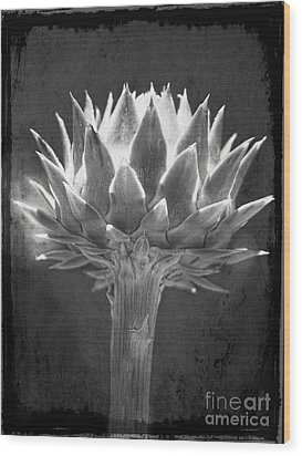Cardoon Wood Print