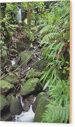 Caribbean Cruise - Dominica - 1212247 Wood Print by DC Photographer