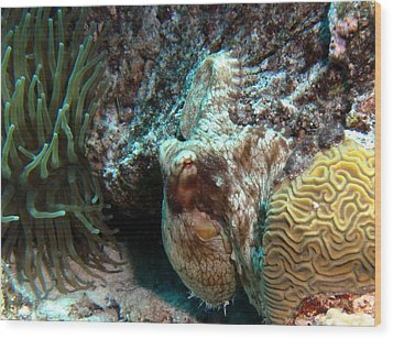 Caribbean Reef Octopus Next To Green Anemone Wood Print by Amy McDaniel