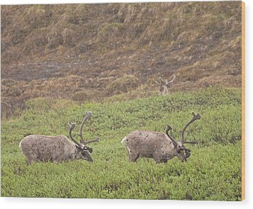 Caribou In The Rain Wood Print by Brian Magnier