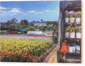 Carlsbad Flower Fields Wood Print