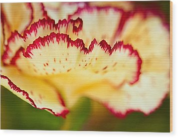 Carnation Cream Wood Print