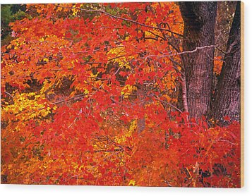 Wood Print featuring the photograph Carolina Autumn by Marion Johnson