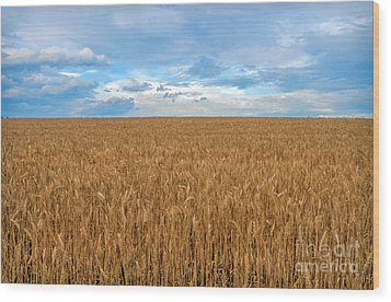 Wood Print featuring the photograph Carolina Wheat Field by Marion Johnson