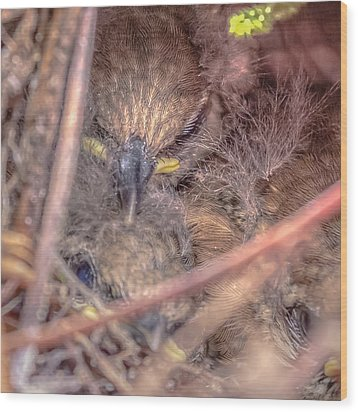 Wood Print featuring the photograph Carolina Wren Nest by Rob Sellers